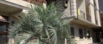 Отдых в Дагомысе 2021 – частный сектор или отели (цены) – что выбрать