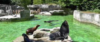 """Зоопарк """"Хеллабрунн"""" в Мюнхене: история создания и представители зоопарка"""